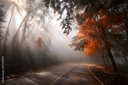 Forest road with sun rays in autumn