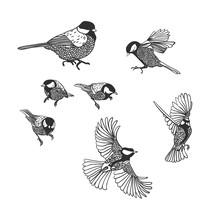 Tit Vector Sketch Birds Set De...