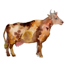 Cow Farm Animal In A Watercolor Style Isolated. Aquarelle Wild Animal For Background.