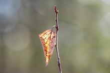 Bud Of Red Flower