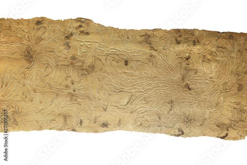 Obraz Piękna struktura drewna wyżłobionego przez korniki na białym tle - fototapety do salonu