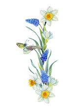 Watercolor Hand Painted Spring Flowers Decoration. Primroses Element Design With Hyachinth, Daffodil, Butterfly, And So On.
