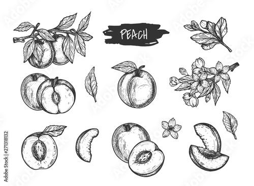 Obraz na płótnie Hand drawn peach and apricot set