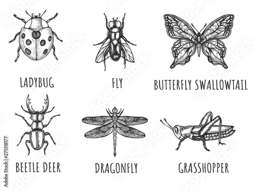 Photo sur Toile Papillons dans Grunge Hand drawn insect bugs collection
