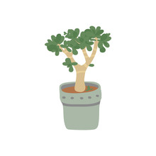 Jade Plant . Pot Plant. Housep...