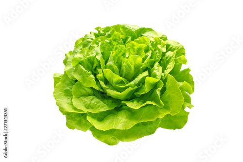 Obraz Green trocadero lettuce salad head - fototapety do salonu