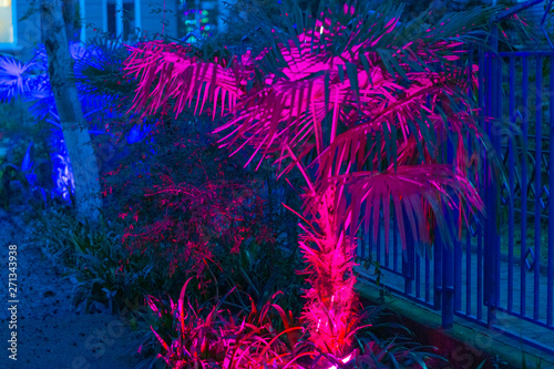 Palm trees glow with neon lights at night.