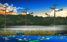Landscape Of Swamp In The Jung...