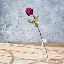 One Pink Rose Flower With Long...