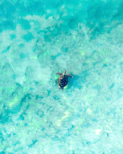 Aerial View Of A Sea Turtle Sw...