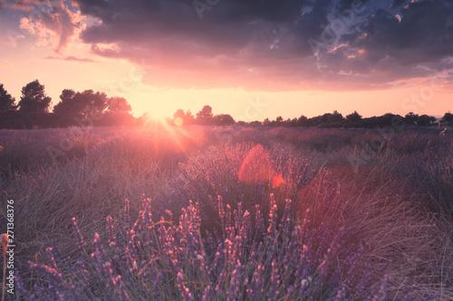 Canvas Prints Lavender Provence