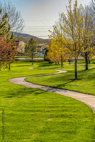 Pathway winding through a terrain with rich green grasses and young trees Wall mural