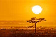 Sunrise Over Acacia Trees In Amboseli