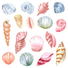 Hand Painted Watercolor Seashell. Hand Drawn Illustration Isolated On White Background. Watercolor Sea Animal Clipart.