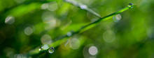 Banner Size Of Morning Dew Sparkling On A Green Grass In Sunlight