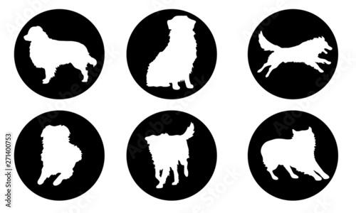 Australian Shepherd Wallpaper Mural