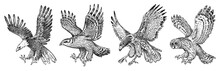 Set Of Wild Birds. Goshawk, Pallid Harrier, Black Kite, Owl And Eagle. Hand Drawn Vector Sketch In Engraved Graphic Style.