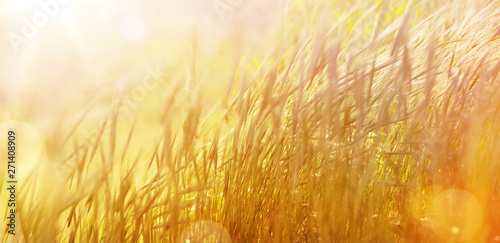 Obraz Art abstract  natural background; summer sunny meadow - fototapety do salonu