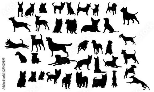 Photo Hunde Icons
