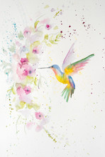 Watercolor Painting Of Humming...