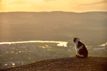 A Lonely Cat At Sunset Contemplates The Valley With The River. Cute Cat On The Background Of The Canyon.