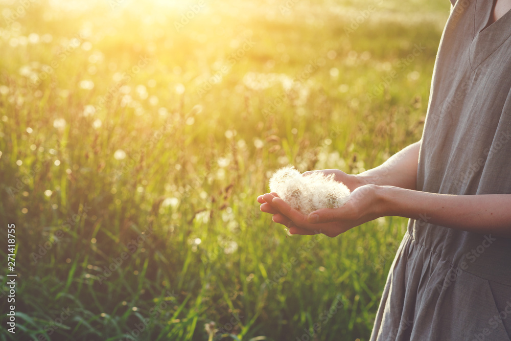 Fototapety, obrazy: happy young woman wearing linen dress standing in sunlight holding beautiful dandelion flowers, happy summer days moments