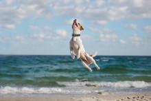 Jumping Dog On Sea Shore