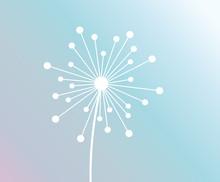 White Dandelion Flower On Pastel Gradient Background.