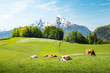 Leinwandbild Motiv Idyllic summer landscape in the Alps with cows grazing on meadows