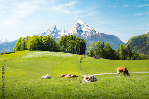 Foto auf Leinwand Akt Idyllic summer landscape in the Alps with cows grazing on meadows