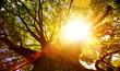 Leinwanddruck Bild - art Bright summer tree nature background