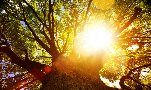 Fotografija  art Bright summer tree nature background