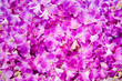 canvas print picture - Blossom tropical background. Orchid flowers pattern.