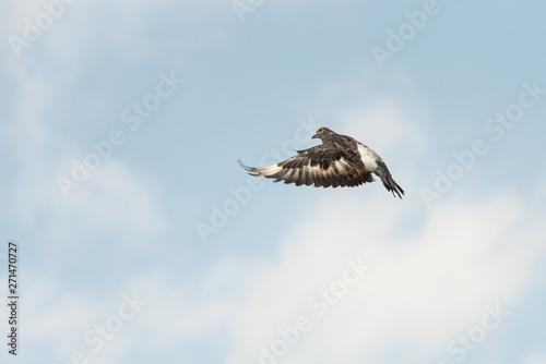 bird flies in sky