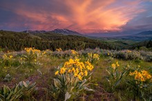 Idaho Sunset Flowers