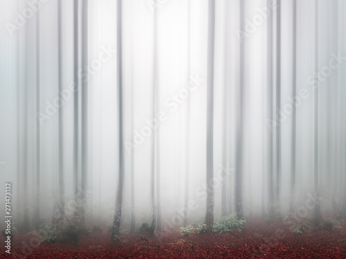 plakat fantasy bright forest with fog and blur
