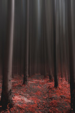 Red Leaves Dark Forest
