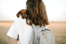 Rear View Of Woman Holding Dachshund Puppy Outdoors
