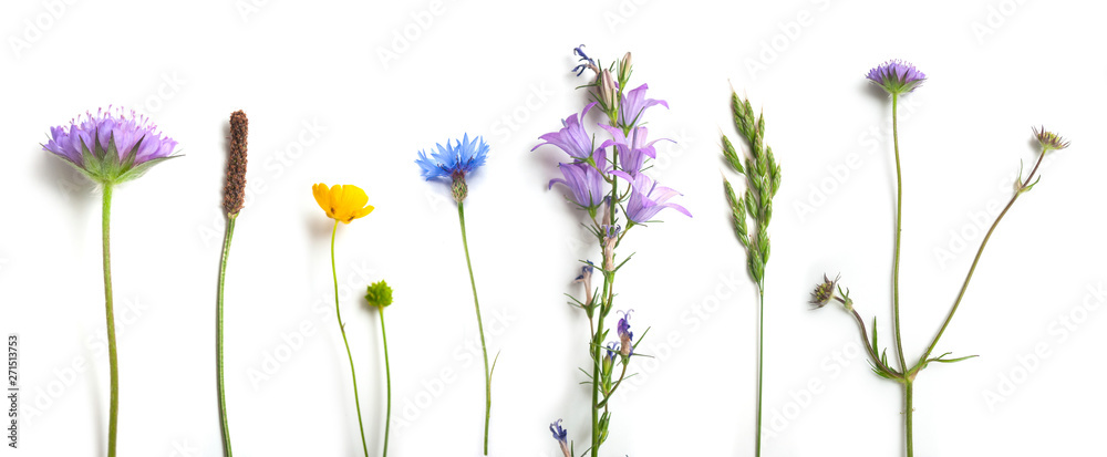 Fototapeta closeup of wild grass and flowers on white background