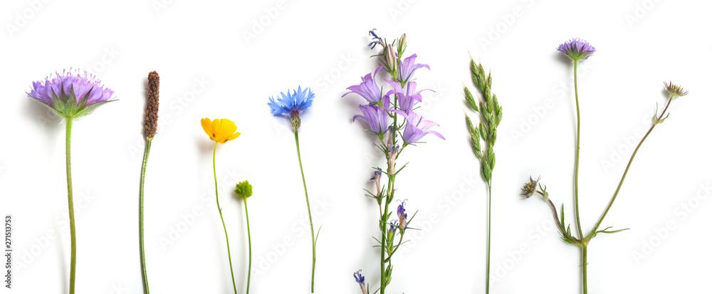 Obraz closeup of wild grass and flowers on white background fototapeta, plakat
