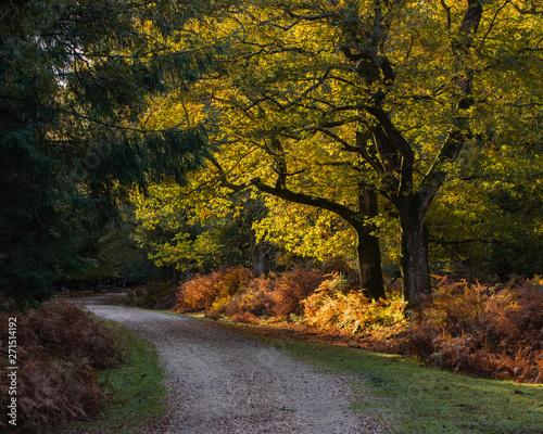 Canvas Prints Autumn autumn in the park