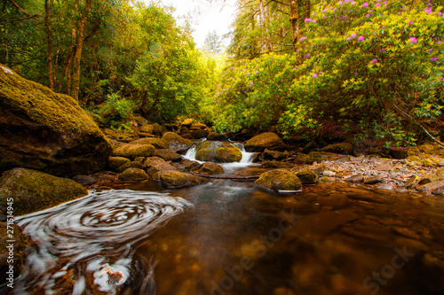 Printed kitchen splashbacks Forest river Torc Waterfall