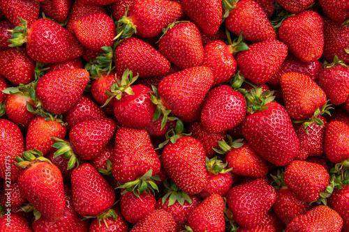 Obraz Red large ripe strawberries close-up. Harvest berries. - fototapety do salonu