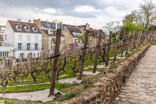 Paris, France - APRIL 8, 2019: Grape plantation in sacre coeur, Paris Canvas Print