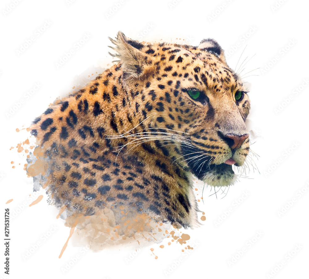 Fototapeta Portrait of Leopard .Watercolor illustration