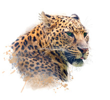 Portrait Of Leopard .Watercolo...