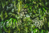walll full of variety of green leaf topical plants some with flowers for background use.