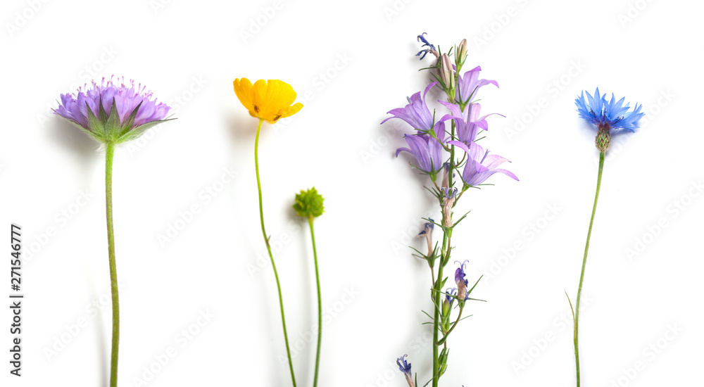 Fototapety, obrazy: closeup of wild flowers on white background