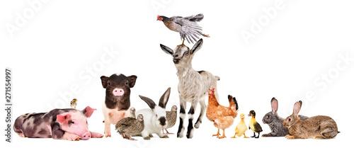 Group of cheerful farm anim...
