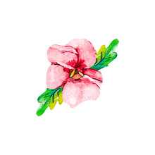 Pink Red Crimson Pansy Flower Isolated On White Background Clipping Path Included. Spring Garden Viola Tricolor. Top View, Flat Lay